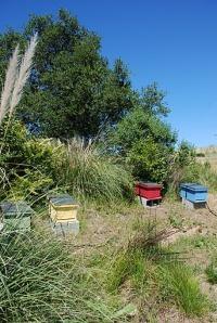 google hives